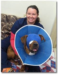 fairview-animal-hospital-helper